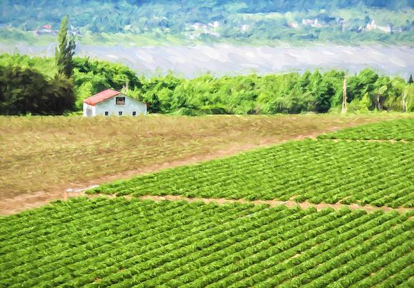 Ile d'Orleans Farm
