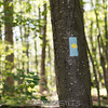 2017-06-11_sessions_woods_0004
