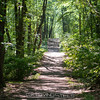 2017-06-11_sessions_woods_0003
