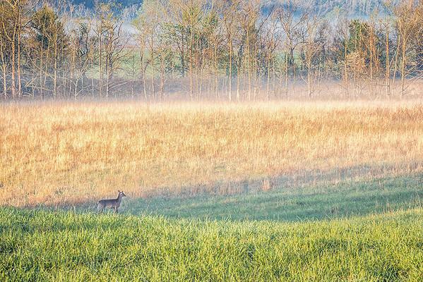 MORNING FOG AND DEER