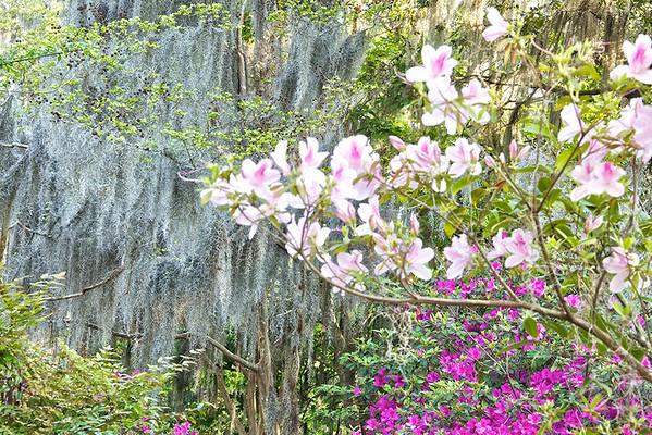 Magnolia Gardens No.1