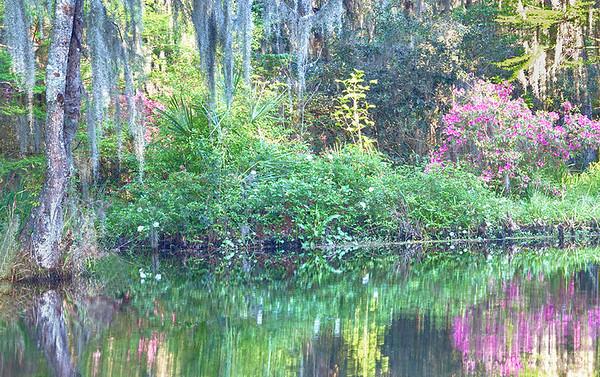 Magnolia Plantation - 2