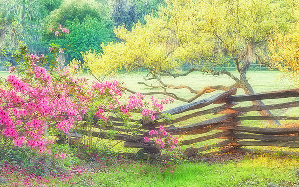 Magnolia Plantation - 3