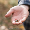 """Tiny frog. <br><span class=""""skyfilename"""" style=""""font-size:14px"""">2017-10-15_valley_falls_0074</span>"""