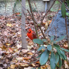 Go into an aquarium and the first thing we see is a cardinal!
