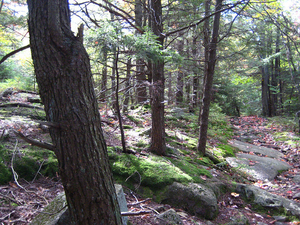 Trail to Leanto