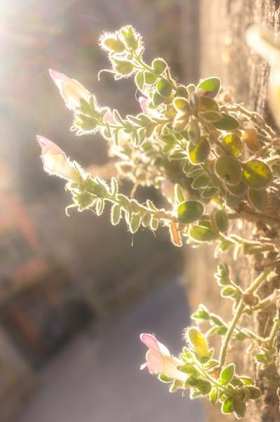 Wall Flowers - Catedral de Almeria