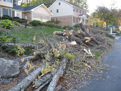 Tree Down at the Brown's Old House