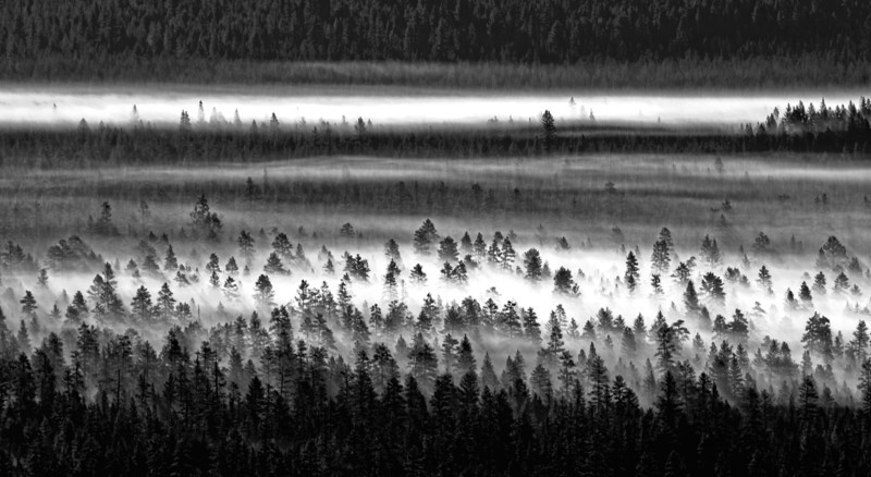 HDR (High Dynamic Range) photo of fog on the Deschutes National Forest (7/22/2011)