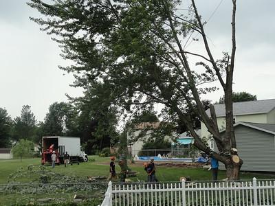 Tree Videos july 18 2012
