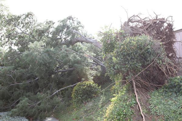 Tree damage to house 11-11