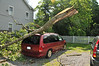 Tree on Car-08