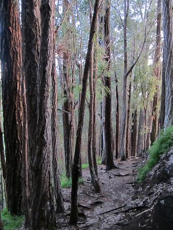 Trees on Trails