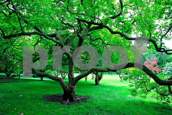 Trees(Ireland,Wales,England):Pack 2
