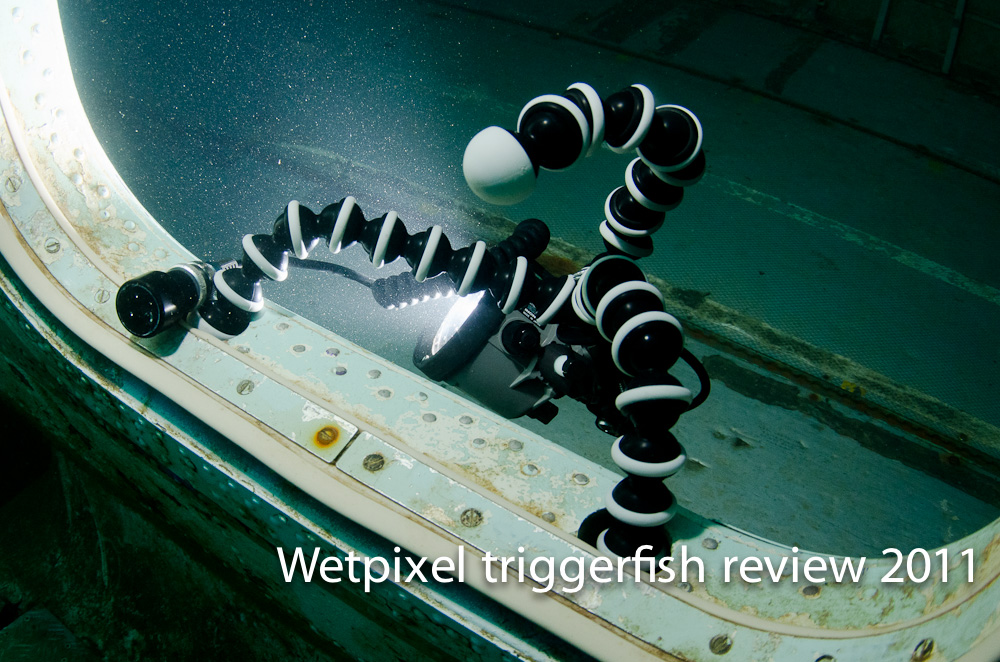 Triggerfish 1-59