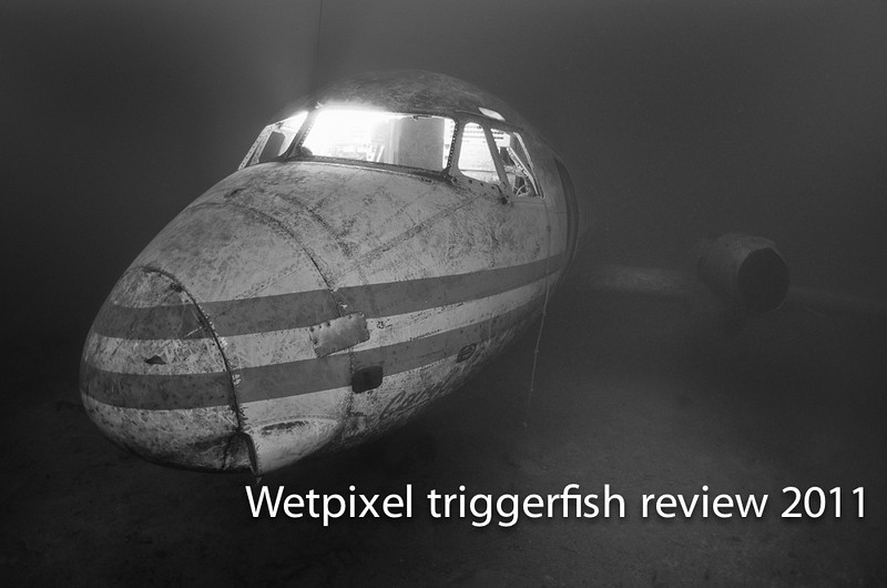 Triggerfish 1-33-Edit-Edit