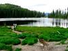 Small lake on top of Kootenay Pass