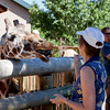 What a joy! Reminds me of a great trip through Fossil Rim Wildlife Park in Glen Rose, Texas. Many smiles...