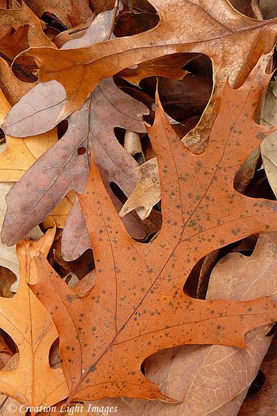 Fallen Leaves 3
