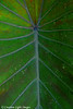 Tropical Leaves 3