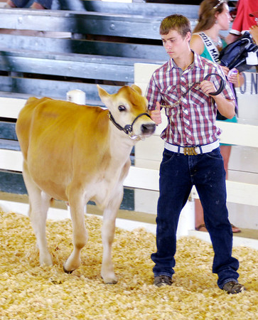 Don Knight/The Herald Bulletin<br /> Dairy Show at the 4-H Fair on Tuesday.