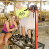 Don Knight/The Herald Bulletin<br /> Sisters Jenna, left, and Jansen Jarrell prepare Jansen's sheep for competition at the 4-H Fair on Tuesday.