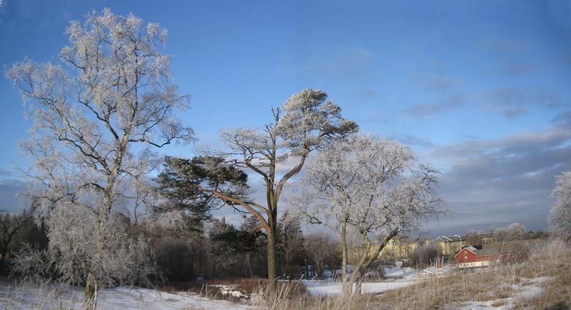 Trær frost Rotvoll