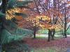 Arboretet på Ringved