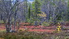 Høstskog3