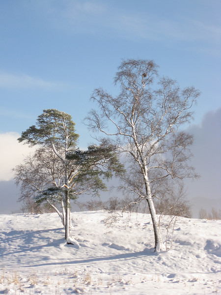 Vintertrær på Rotvoll