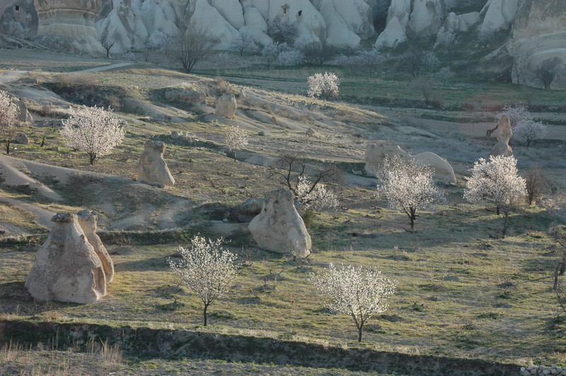 Rock formations and blooming apricot trees, Cappadocia, Turkey.