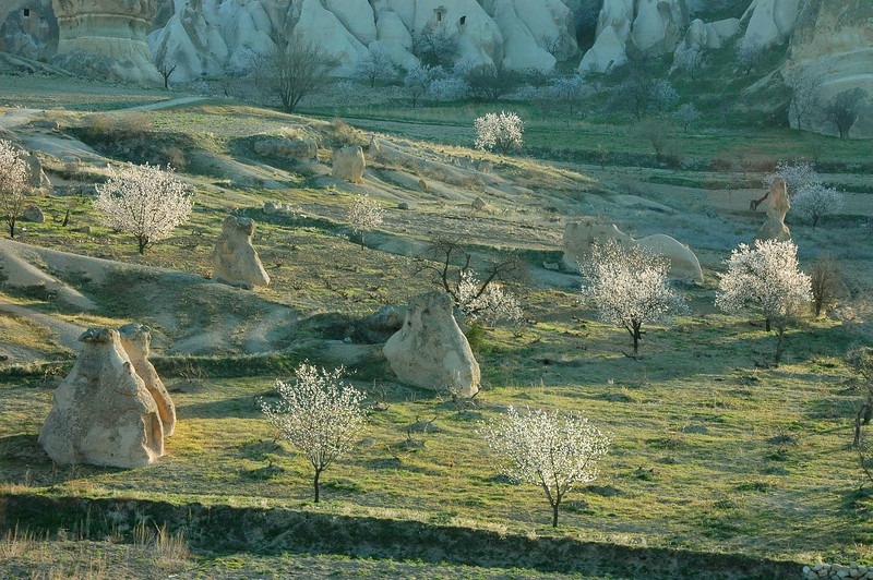 Rock formations and apricot trees, Cappadocia.