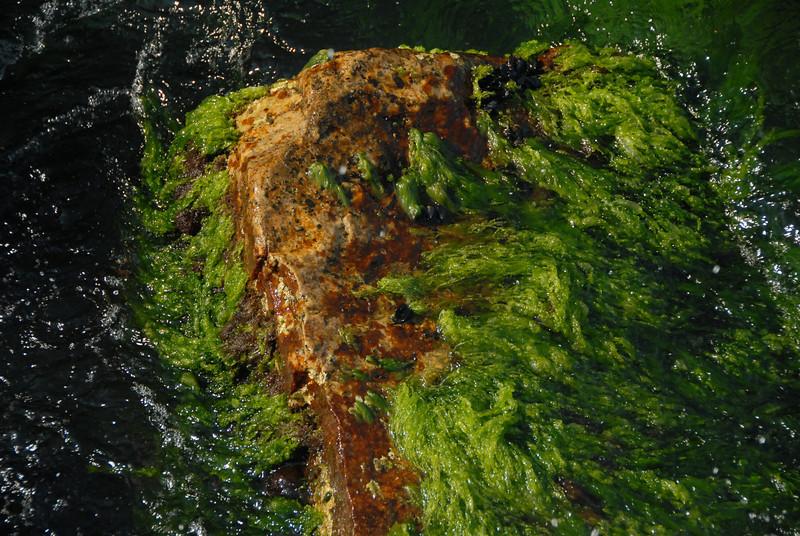 Seaweed, Sea of Marmara, Turkey.