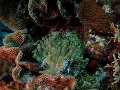 Turks and Caicos Explorer 2013