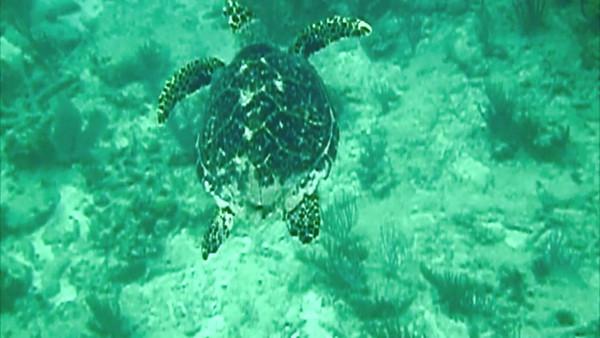 Turtle Wonderful Video
