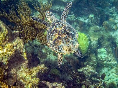 Turtles and UW Photos,  December 2014l