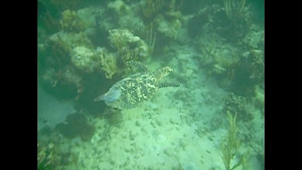 Turtles in Mahoebay, Video, 2009