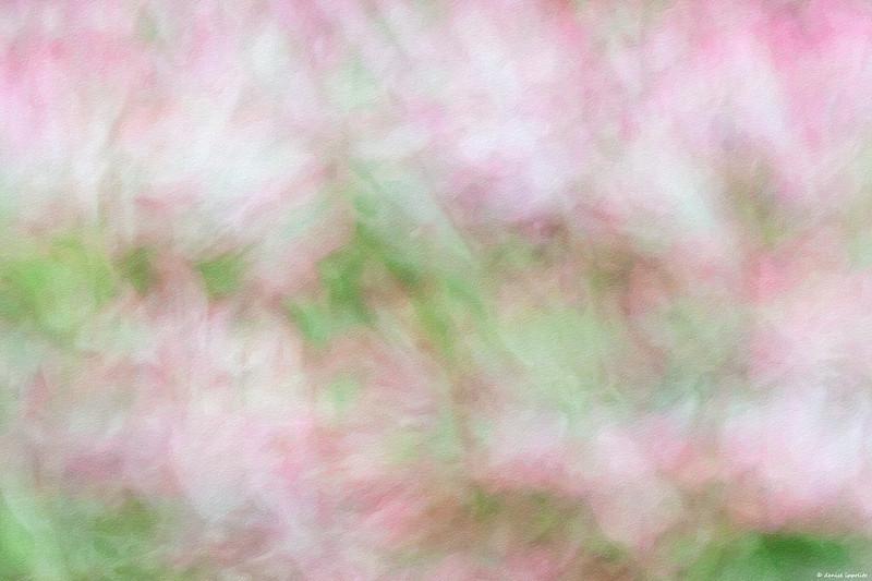 <center> Image &copy; 2011/Denise Ippolito Photography Alstroemeria ~ In -camera blur </center>