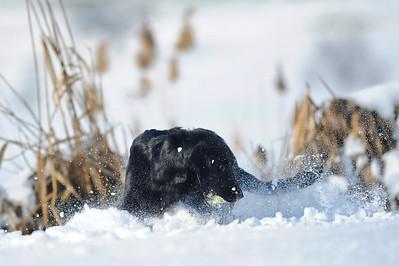 Diese wunderschönen Schneebilder sind von Roo Fotografie... Herzlichen Dank!