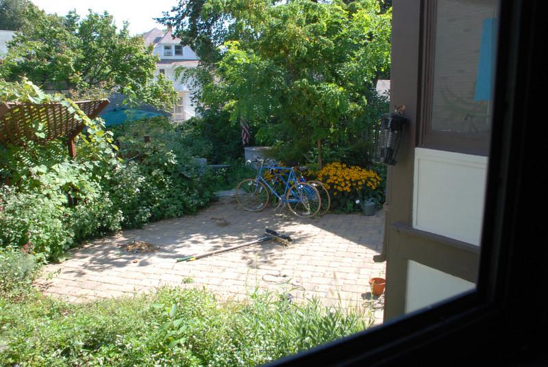 Backyard_0122