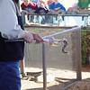Claxton, GA Rattlesnake Roundup