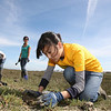 Cindy Chew<br /> 3/18/08<br /> Christine Kho, a freshman at Pamona College, plants a native marsh wetland plant as part of her school's volunteer program with Literacy for Environmental Justice at Heron's Head Park on Tuesday.