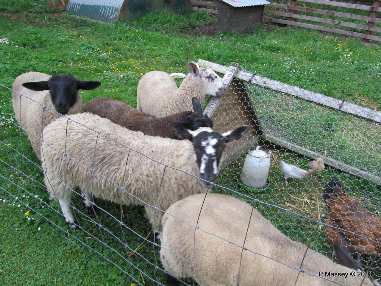 High Rigg Farm 24-06-2013 16-02-33