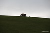 Sheep Above Whitepark Road Ballintoy 25-02-2017 11-42-38