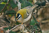 Firecrest 2 Seaforth March 2006
