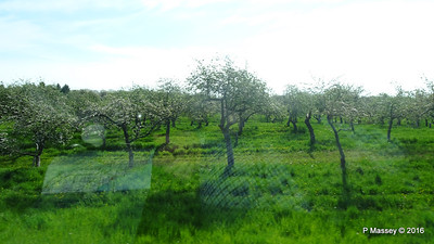 Cherry Trees N Along U Silverdale to Mikels Rds Wisconsin 24-05-2016 08-49-29