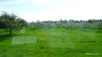 Cherry Trees N Along U Silverdale to Mikels Rds Wisconsin 24-05-2016 08-49-35