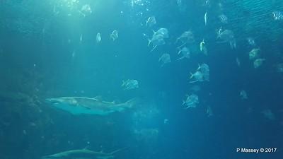Aquarium at Mandalay Bay Las Vegas 02-04-2017 02-26-19