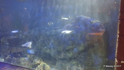 Aquarium at Mandalay Bay Las Vegas 02-04-2017 02-24-21