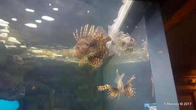 Aquarium at Mandalay Bay Las Vegas 02-04-2017 02-23-10